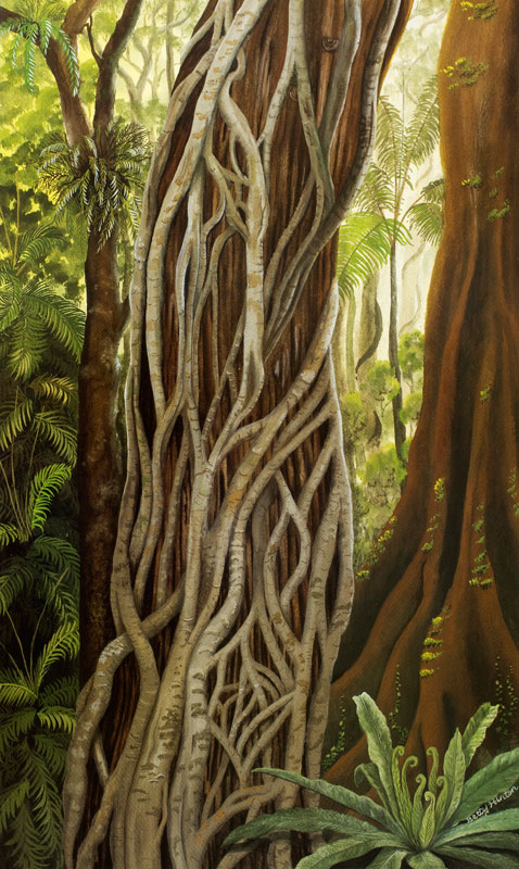 Daintree Rainforest by Betty Hinton