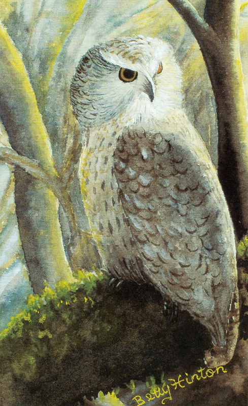 Owl by Betty Hinton