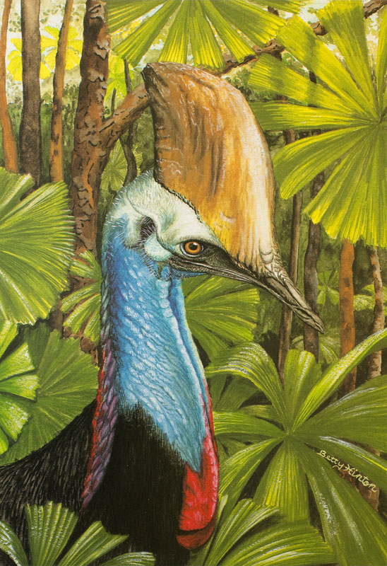 Cassowary by Betty Hinton
