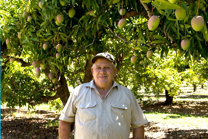 Ken in the Mango Orchard
